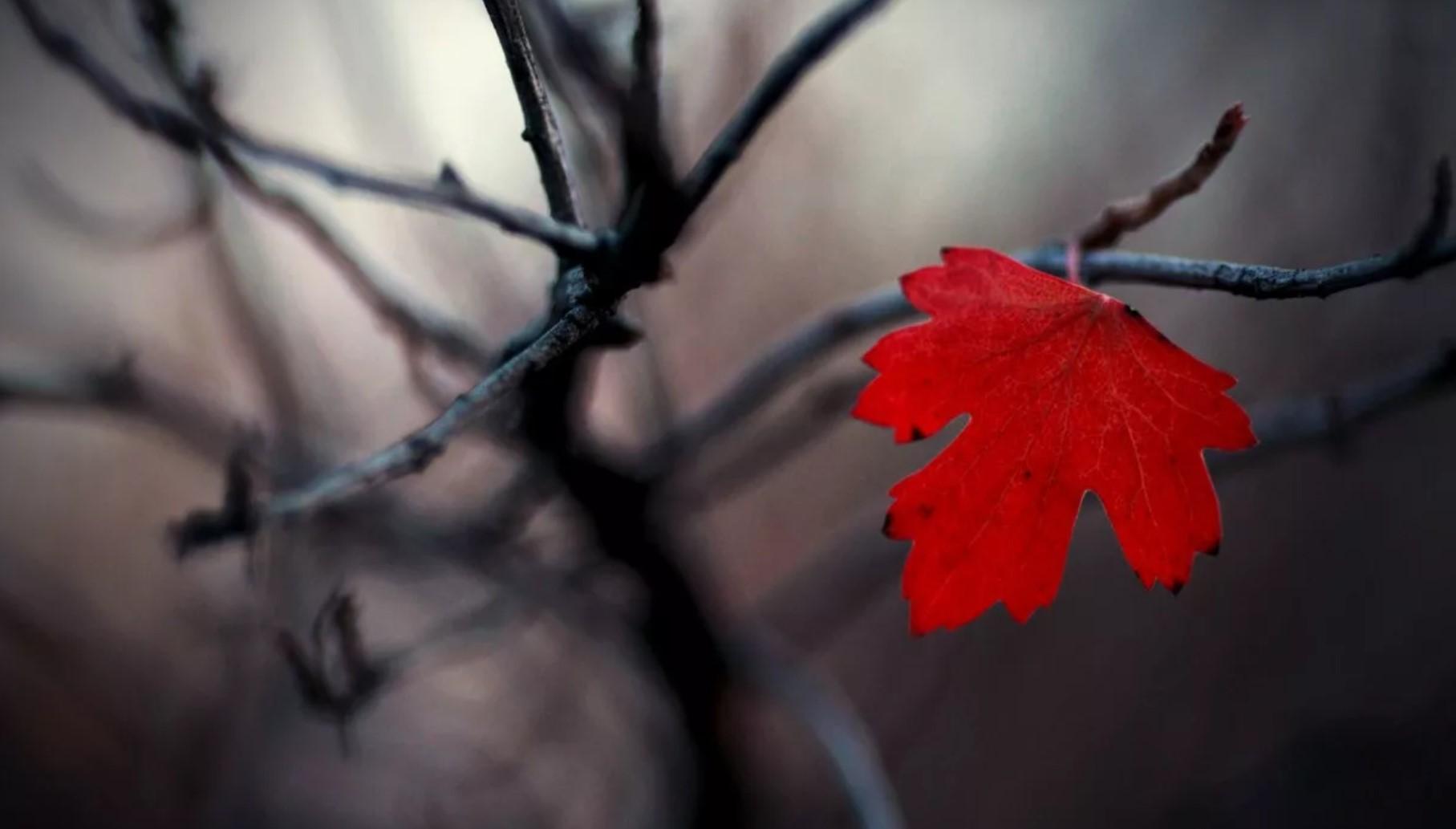 Как пережить осеннюю хандру: 11 лайфхаков, которые избавят от депрессии